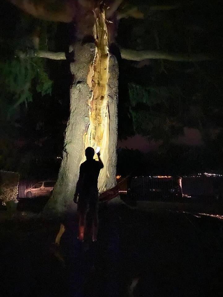 fulmine albero
