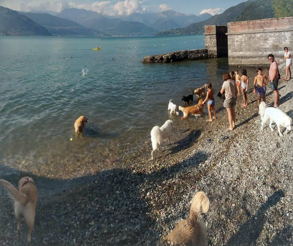 Dog Beach Dervio