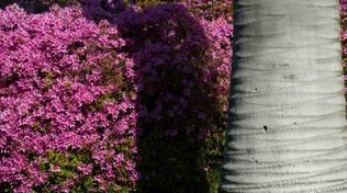 villa carlotta adotta una pianta