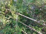 albate segnalazioni dei lettori torrente da pulire e pianta pericolosa