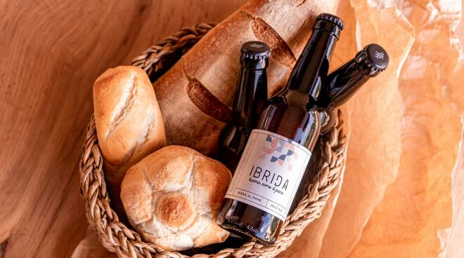 ibrida birra