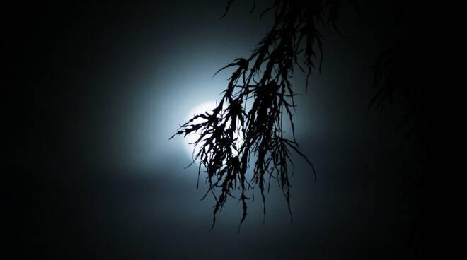 5 cose lune di halloween