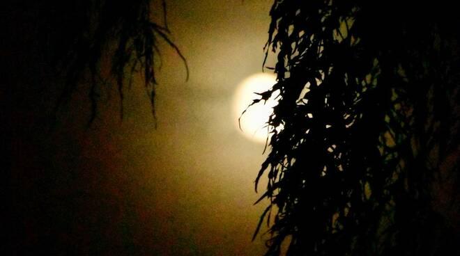 5 cose lune halloween