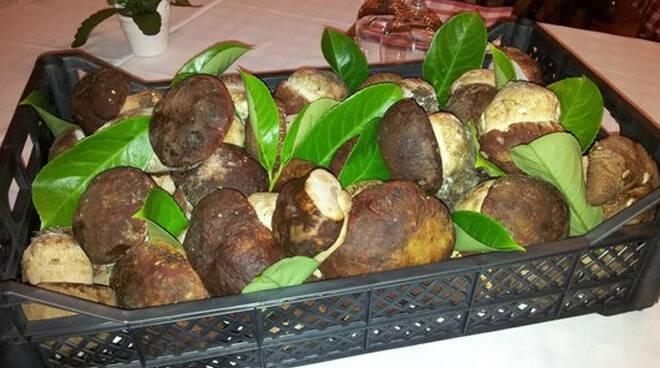 5 ristoranti funghi