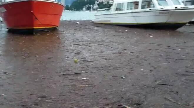 detriti nel lago di como dopo esondazione contenuti dalle barriere antidetriti