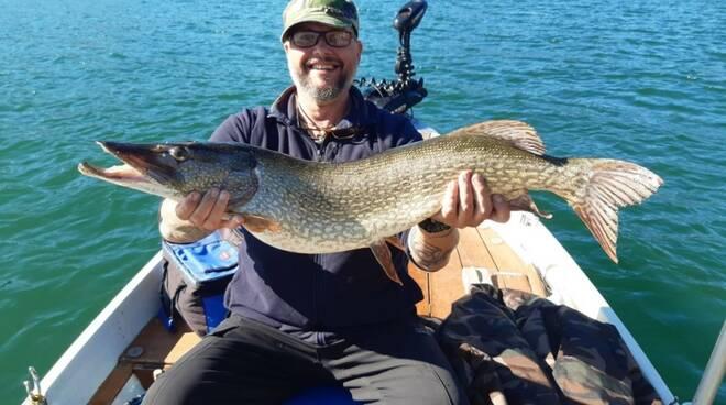 luccio da un metro pescato da william cavadini pescatori como alpha nel lago