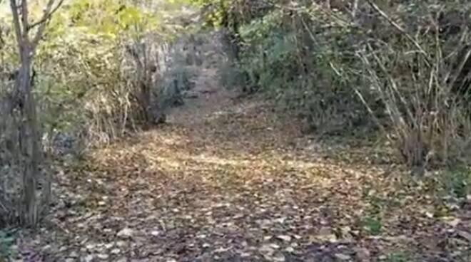 anna bocchietti esperta di botanica a ciaocomo bosco piante