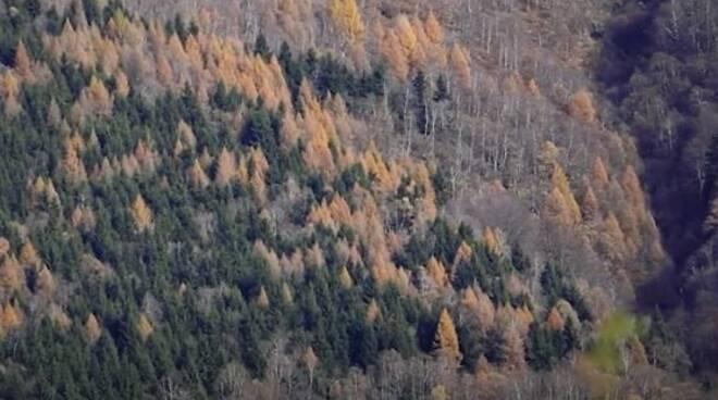 foreste valle intelvi