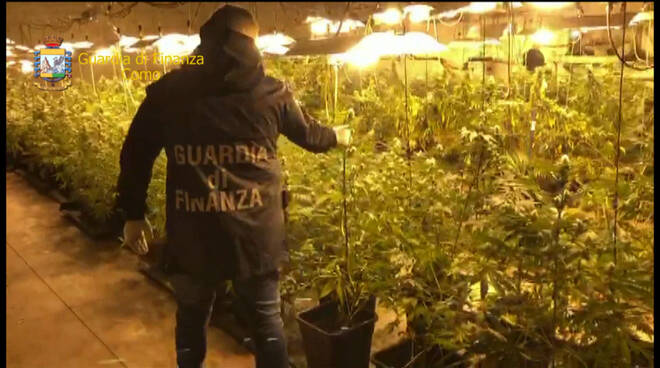 operazione finanza droga capannone capiago sequestro piante marijuana