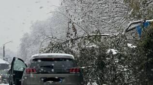 alberi caduti per neve como viale giulio cesare e poi andrate di fino mornasco