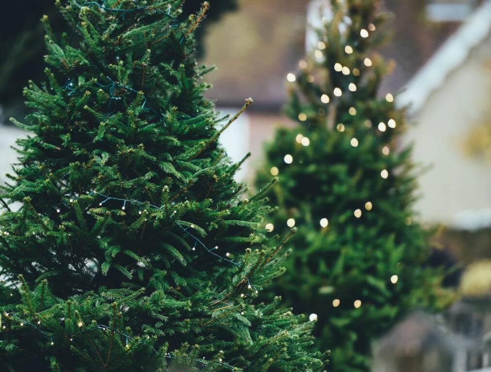 Verde Natale Fondazione Volta
