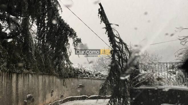 neve cardina pericolo per piante william