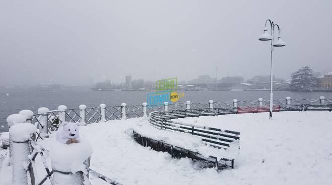 orsetto polare (di peluche) a villa olmo dopo la nevicata