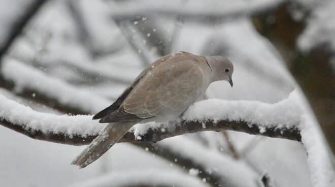 uccelli neve