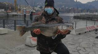 william cavadini pesca nel lago lucioperca da 8 chili foto sua su barca e pesce