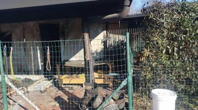 Incendio canile olgiate sindaco moretti appello