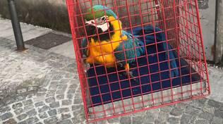 pappagallo recuperato dal tetto dai pompieri nella sua gabbia