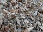 piccolo faggio cresce monte goy piantato da lettrice