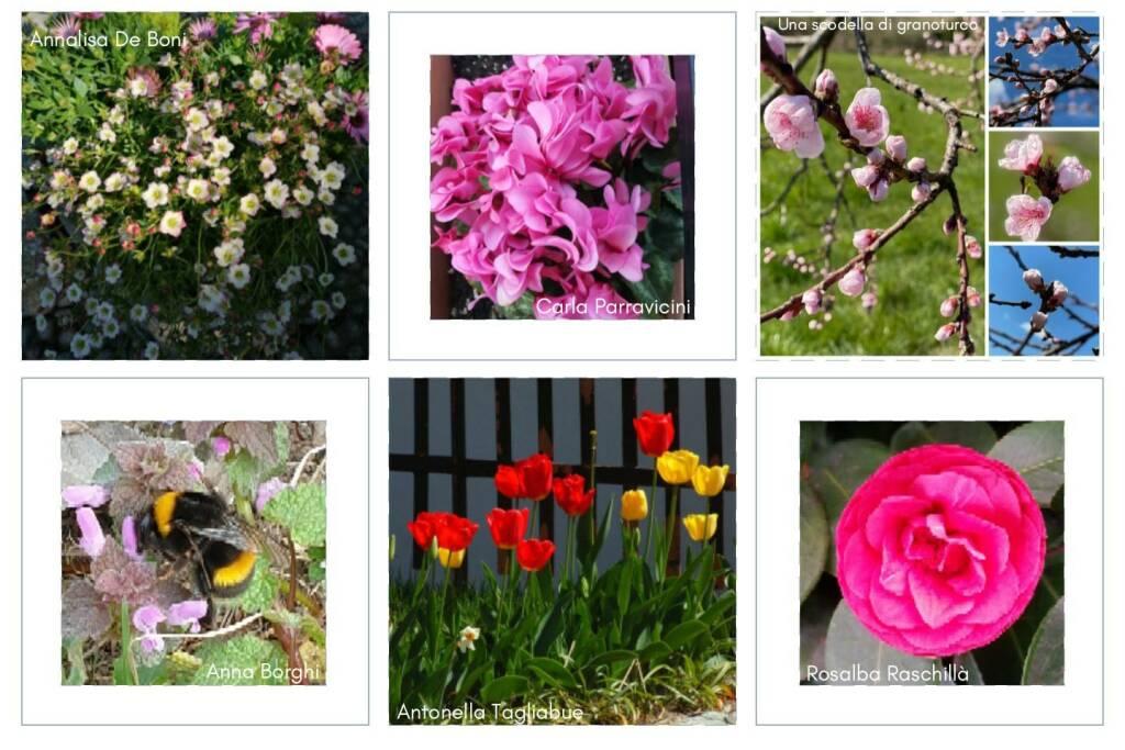 flowers daniela manili pessina