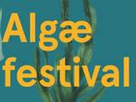 algae festival