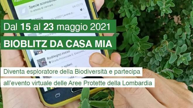bioblitz 2021