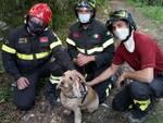 cane burrone alta valle d'intelvi recupero pompieri