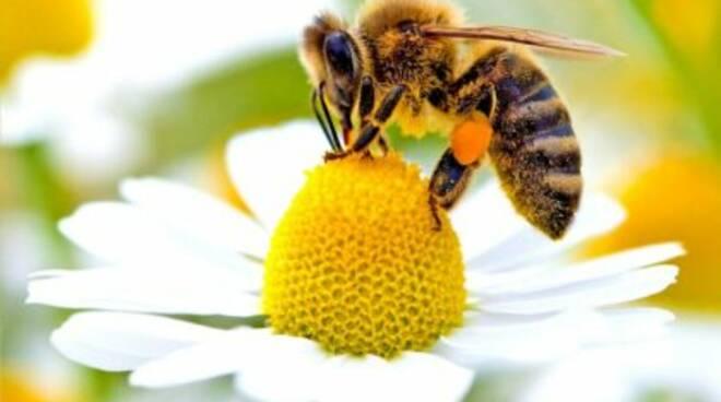 giornata delle api