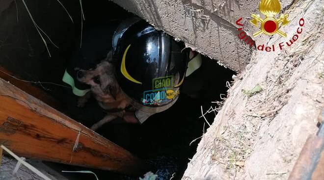 cane finito nel pozzo a lipomo, salvato dai pompieri