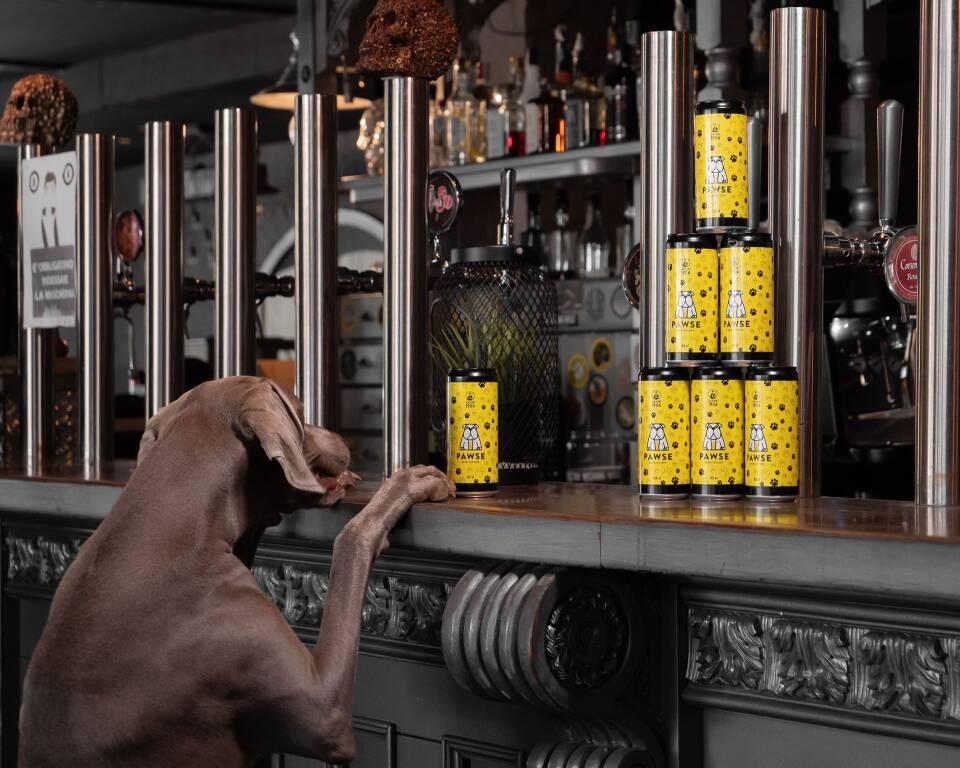 Pawse birra per cani