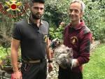cane finisce nel valletto a Veleso recupero dei pompieri di Canzo