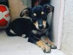 cani salvati da comoscodinzola dalle campagne di benevento in questa estate 2021