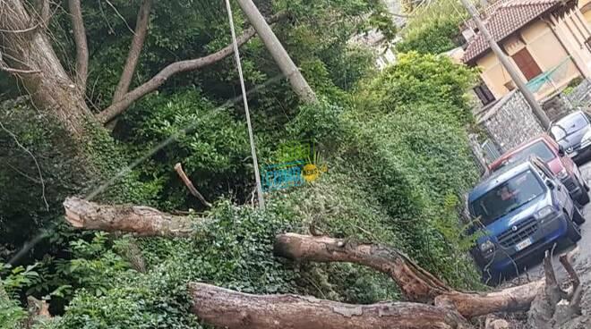 dizzasco albero cade sui cavi della corrente e li trancia immagini punto inidente
