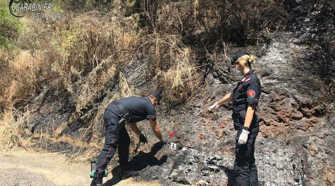 incendio doloso boschi e pascoli di garzeno marzo 19 danni provocati