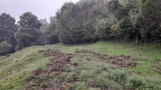 devastazione cinghiali notte centro valle intelvi prati e campi