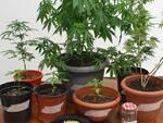 droga in vasi scoperta dai carabinieri erba giardino casa di un ragazzo