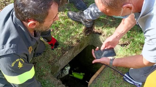 recupero pompieri tasso finito nella conduttura dell'acqua a laino valle intelvi