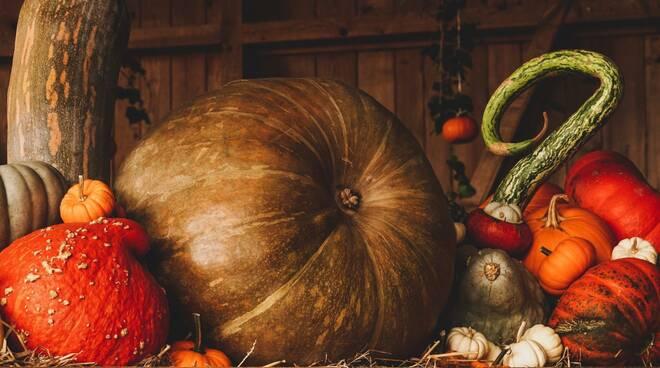 zucca day Halloween